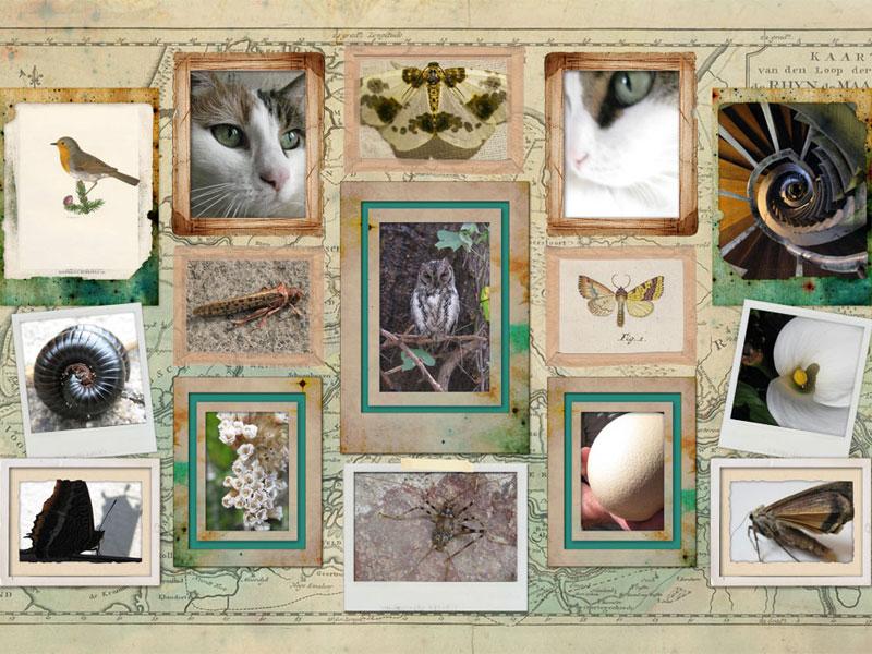 Collage Vintage Designs - EasyCollage
